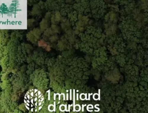 Participer à la reforestation avec Trees-Everywhere !